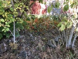 Ursprungliga marken där Bårby No 6 låg för e branden